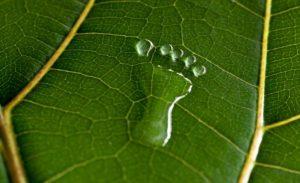 Acciones para frenar la huella de carbono